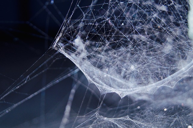 zamotaná pavučina