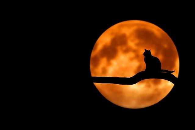 kočka silueta
